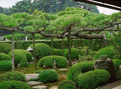 Jgarden gardens for Japanese outdoor plants